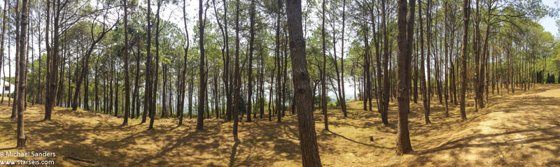 Trees at Khao Kho Palace