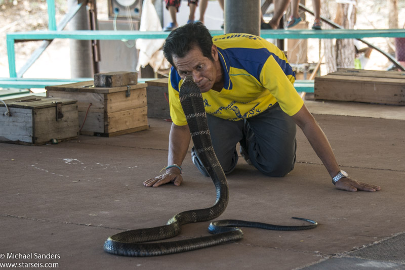 At the King Cobra Villiage near Khon Kaen